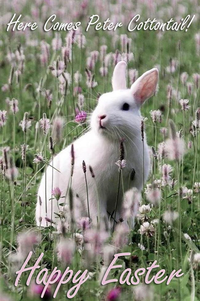 Easterblog_017