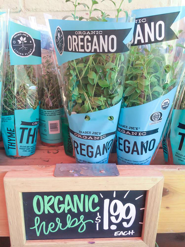 Segreto Secrets - Favorite Things at Trader Joe's - Potted Herb Plants