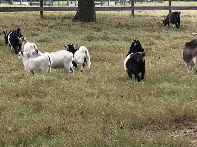 Segreto Secrets Blog! A Day on the Farm!