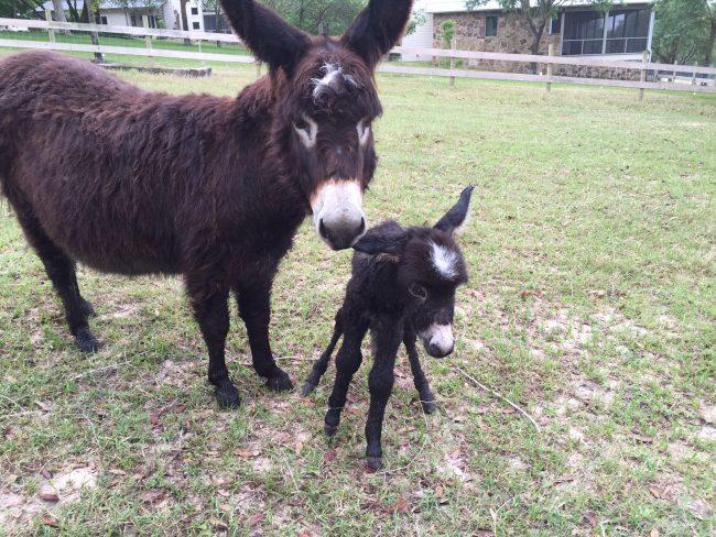 barbara-iglesias-donkeys