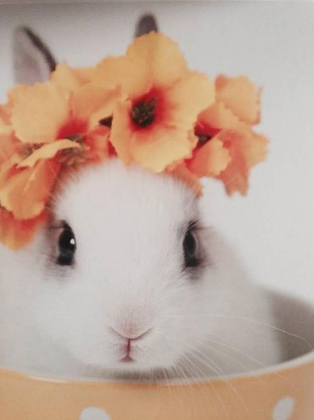 Easterblog_002