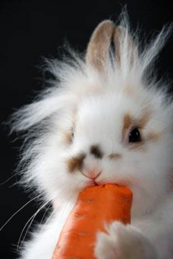 Easterblog_004