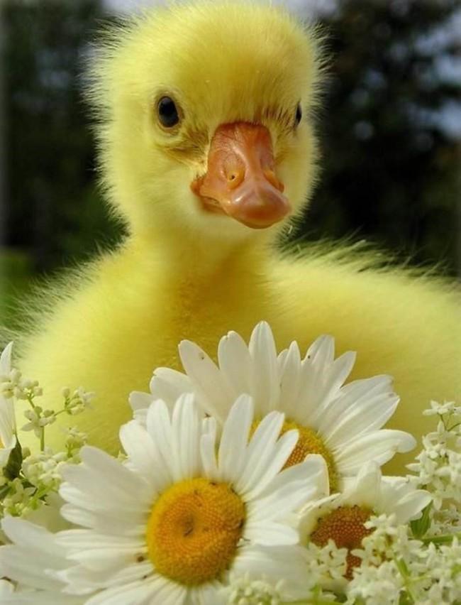 Easterblog_013