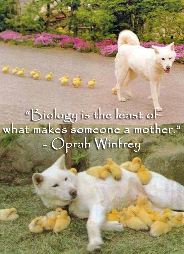 Mothersdayblog_quotes_2015_0012_pin