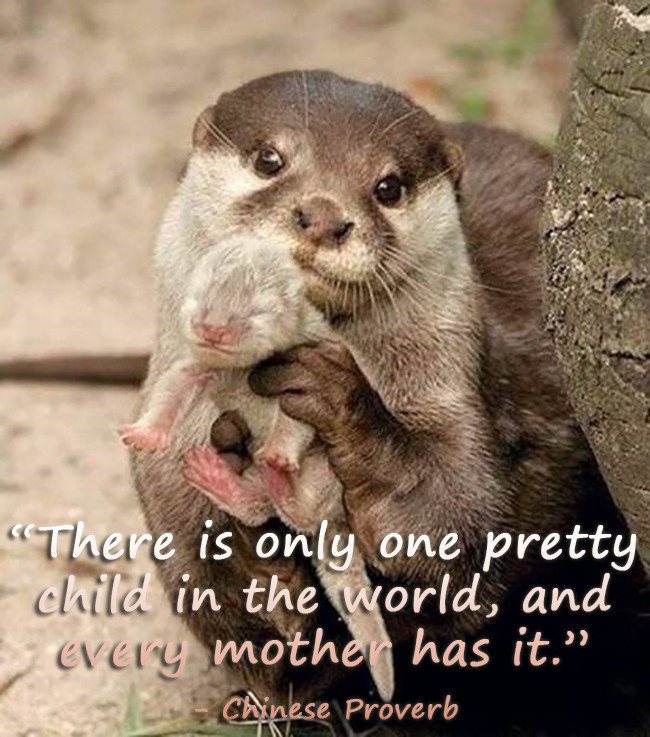 Mothersdayblog_quotes_2015_005_pin