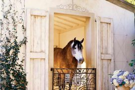 A Home for Horses
