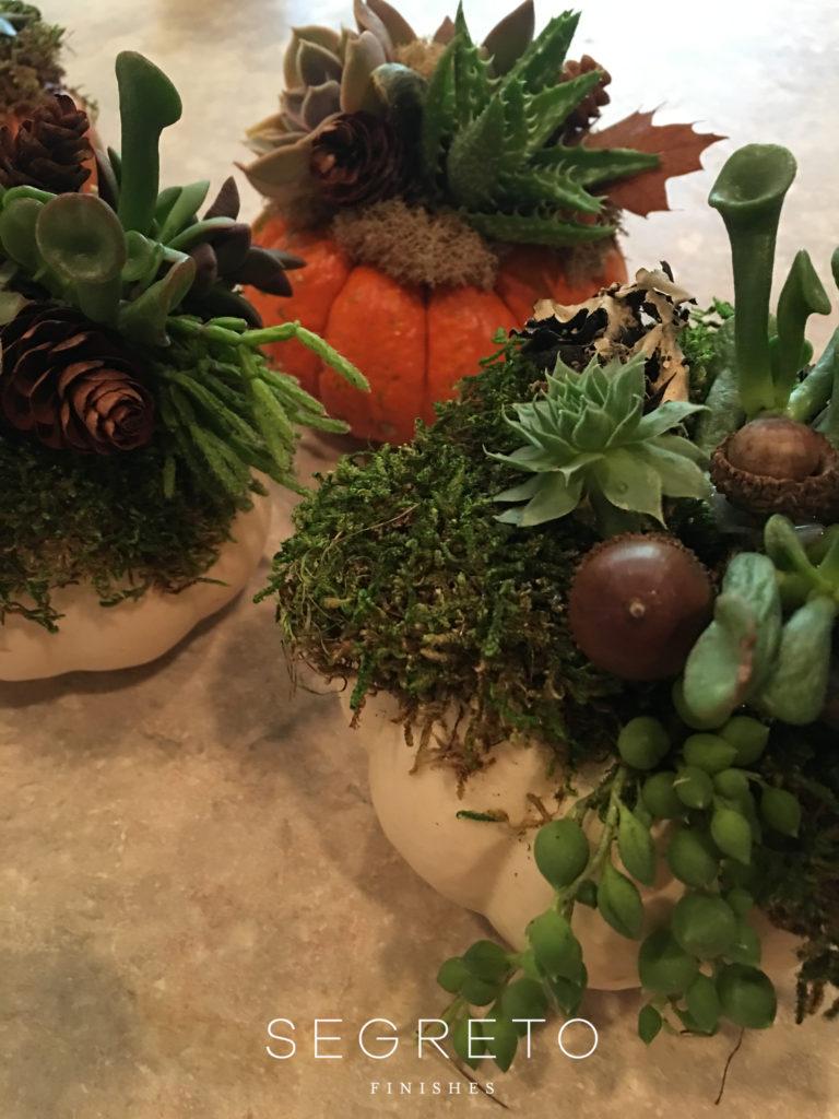Segreto Finishes DIY Pumpkin Succulents