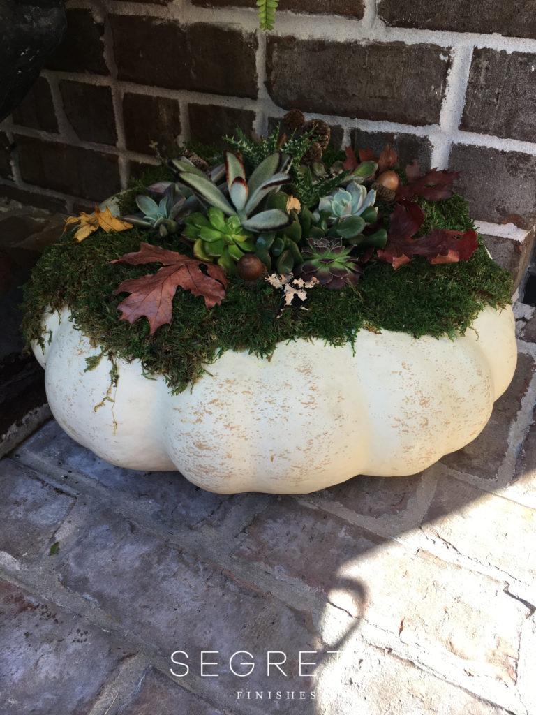 Segreto Finishes Pumpkin Succulents Fall Decor