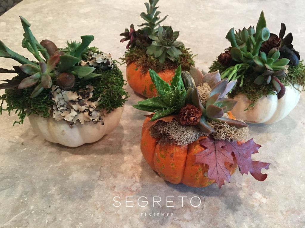 Segreto Finishes Fall Pumpkin DIY Succulents